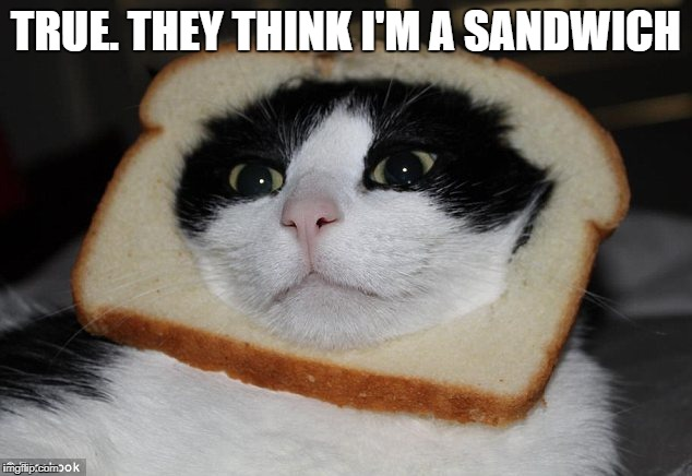 TRUE. THEY THINK I'M A SANDWICH | made w/ Imgflip meme maker