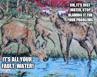 Stop Blaming Water | IT'S ALL YOUR FAULT, WATER! UM, IT'S JUST WATER, STOP BLAMING IT FOR YOUR PROBLEMS. | image tagged in deer,doe,water,blame,problems | made w/ Imgflip meme maker