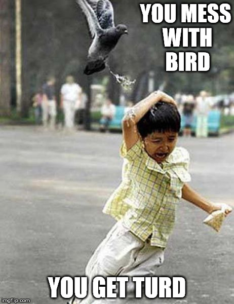 YOU MESS WITH BIRD YOU GET TURD | made w/ Imgflip meme maker