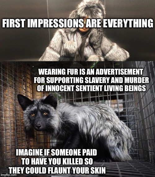 F%€K FUR | FIRST IMPRESSIONS ARE EVERYTHING WEARING FUR IS AN ADVERTISEMENT FOR SUPPORTING SLAVERY AND MURDER OF INNOCENT SENTIENT LIVING BEINGS IMAGIN | image tagged in fur,animals,cute animals,dog,pets | made w/ Imgflip meme maker