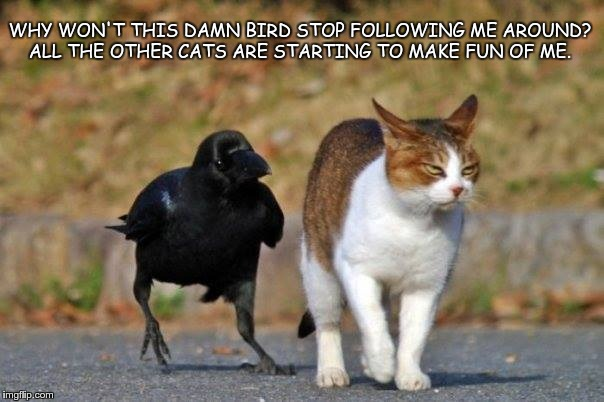 WHY WON'T THIS DAMN BIRD STOP FOLLOWING ME AROUND? ALL THE OTHER CATS ARE STARTING TO MAKE FUN OF ME. | image tagged in raven following cat | made w/ Imgflip meme maker