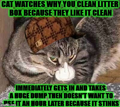 CAT WATCHES WHY YOU CLEAN LITTER BOX BECAUSE THEY LIKE IT CLEAN IMMEDIATELY GETS IN AND TAKES A HUGE DUMP THEN DOESN'T WANT TO USE IT AN HOU | image tagged in scumbag feline,scumbag | made w/ Imgflip meme maker