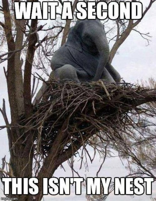 This isn't my nest  | image tagged in funny elephant,funny nest | made w/ Imgflip meme maker