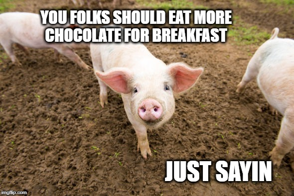 Bacon early stages | YOU FOLKS SHOULD EAT MORE CHOCOLATE FOR BREAKFAST JUST SAYIN | image tagged in bacon early stages | made w/ Imgflip meme maker