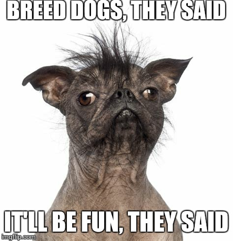 BREED DOGS, THEY SAID IT'LL BE FUN, THEY SAID | made w/ Imgflip meme maker