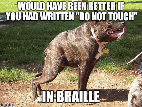 "Inbred dog | WOULD HAVE BEEN BETTER IF YOU HAD WRITTEN ""DO NOT TOUCH"" IN BRAILLE 