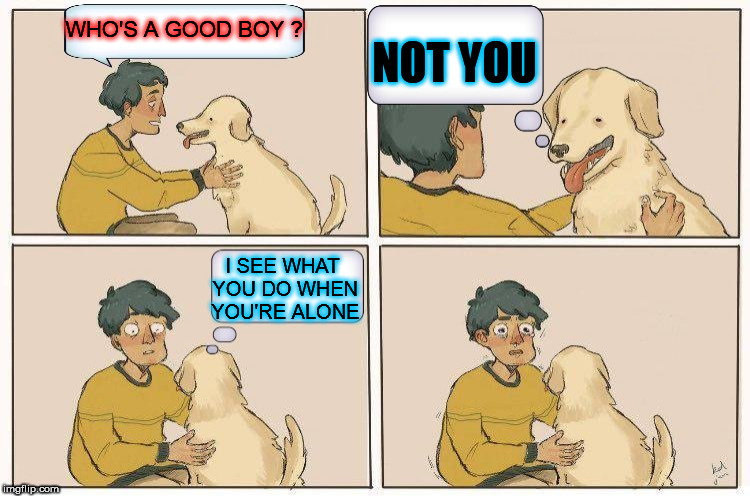 WHO'S A GOOD BOY ? NOT YOU I SEE WHAT YOU DO WHEN YOU'RE ALONE | image tagged in doge,pets,good boy,dog,doggy,caught in the act | made w/ Imgflip meme maker