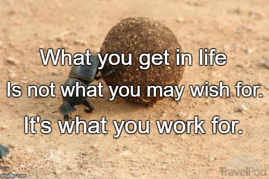 Hard Working Dung Beetle | What you get in life It's what you work for. Is not what you may wish for. | image tagged in hard working dung beetle | made w/ Imgflip meme maker