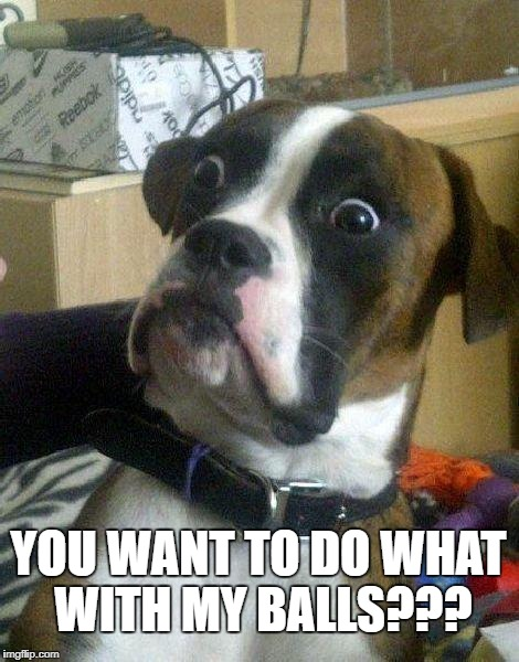 Surprised Dog | YOU WANT TO DO WHAT WITH MY BALLS??? | image tagged in surprised dog | made w/ Imgflip meme maker