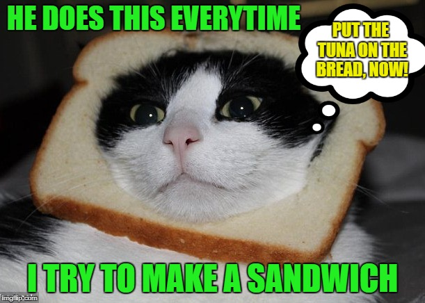 Nothing to see here, just us slices of bread | HE DOES THIS EVERYTIME I TRY TO MAKE A SANDWICH PUT THE TUNA ON THE BREAD, NOW! | image tagged in funny memes,cat,sandwich | made w/ Imgflip meme maker
