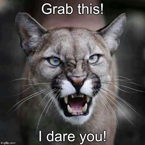 Grab this! I dare you! | image tagged in growling cougar mountain lion | made w/ Imgflip meme maker