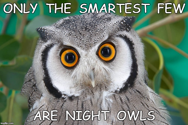 ONLY  THE  SMARTEST  FEW ARE  NIGHT  OWLS | image tagged in mensa,high iq,night owl,intelligence,intelligent,morning | made w/ Imgflip meme maker