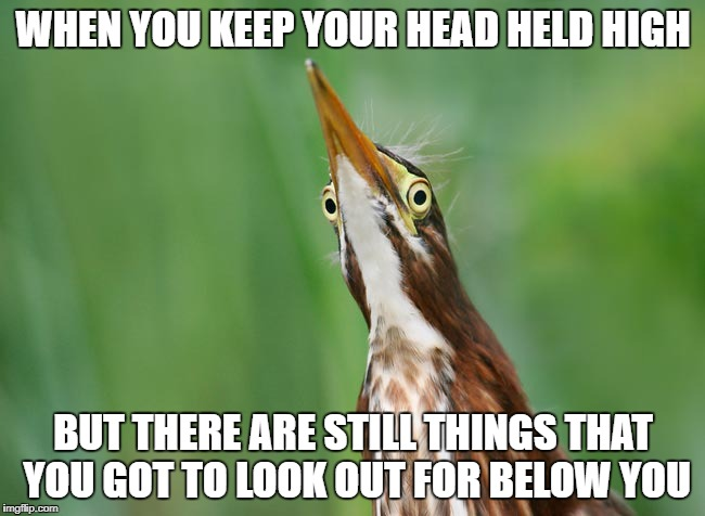 Head held high | WHEN YOU KEEP YOUR HEAD HELD HIGH BUT THERE ARE STILL THINGS THAT YOU GOT TO LOOK OUT FOR BELOW YOU | image tagged in bird | made w/ Imgflip meme maker