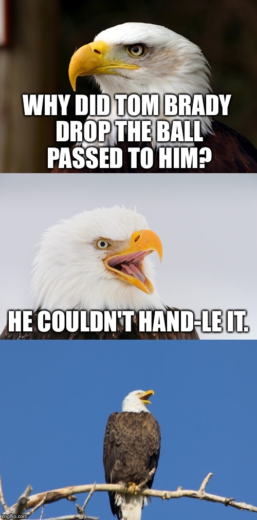 This will piss off some Patriots fans | WHY DID TOM BRADY DROP THE BALL PASSED TO HIM? HE COULDN'T HAND-LE IT. | image tagged in bad pun eagle,tom brady,hand,superbowl,memes,nfl football | made w/ Imgflip meme maker