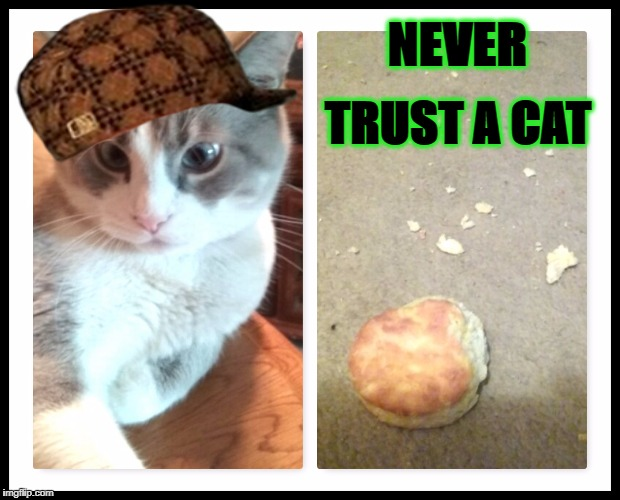 NEVER TRUST A CAT | image tagged in never trust a cat,scumbag | made w/ Imgflip meme maker