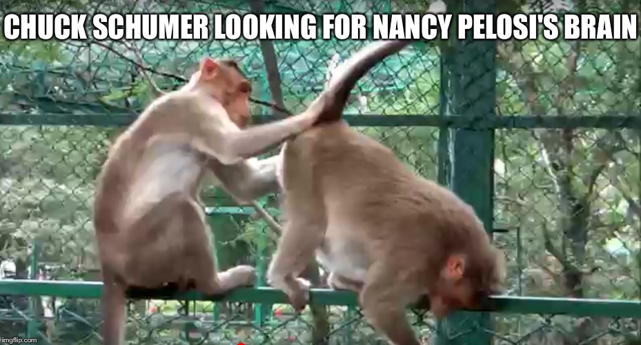 Chuck Schumer looking for Nancy pelosi's brain | CHUCK SCHUMER LOOKING FOR NANCY PELOSI'S BRAIN | image tagged in chuck schumer,nancy pelosi,monkey,ass,brain | made w/ Imgflip meme maker