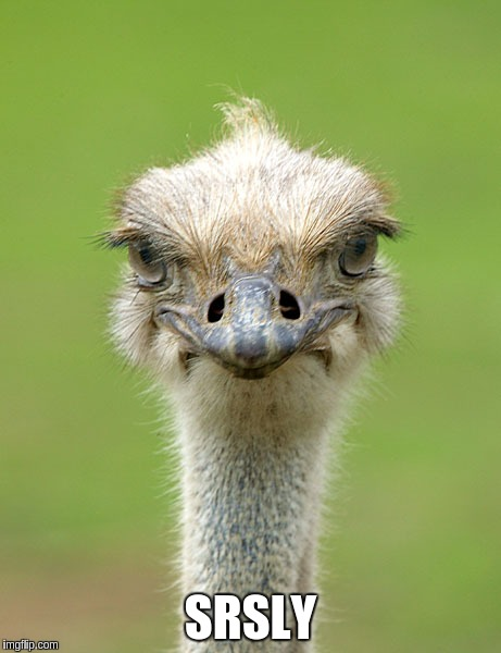 Shocked ostrich | SRSLY | image tagged in ostrich,philly,superbowl | made w/ Imgflip meme maker