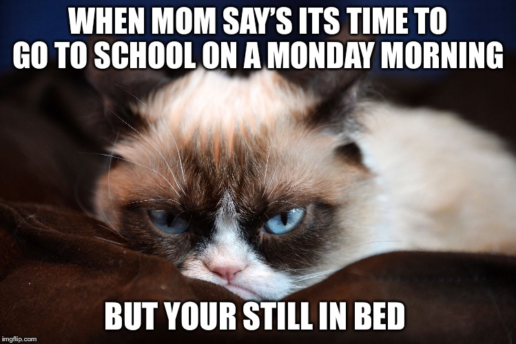 I HATE MONDAYS  | WHEN MOM SAY'S ITS TIME TO GO TO SCHOOL ON A MONDAY MORNING BUT YOUR STILL IN BED | image tagged in grumpy cat | made w/ Imgflip meme maker
