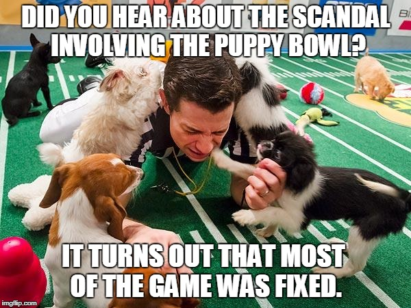Puppy Bowl scandal | DID YOU HEAR ABOUT THE SCANDAL INVOLVING THE PUPPY BOWL? IT TURNS OUT THAT MOST OF THE GAME WAS FIXED. | image tagged in puppy bowl | made w/ Imgflip meme maker