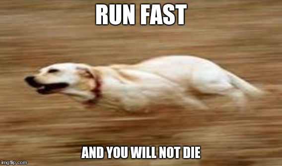 RUN FAST AND YOU WILL NOT DIE | made w/ Imgflip meme maker