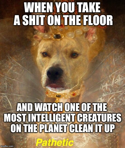 Taking a dump on the floor | WHEN YOU TAKE A SHIT ON THE FLOOR AND WATCH ONE OF THE MOST INTELLIGENT CREATURES ON THE PLANET CLEAN IT UP | image tagged in dogs,funny memes,humans,dog lovers | made w/ Imgflip meme maker