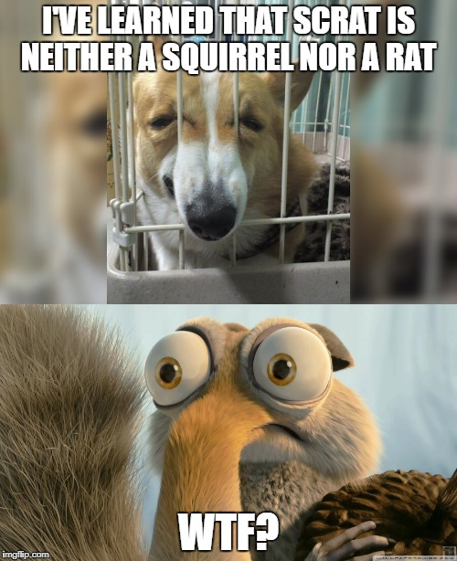 (Funny Title) | I'VE LEARNED THAT SCRAT IS NEITHER A SQUIRREL NOR A RAT WTF? | image tagged in memes,scrat,ice age,philosoraptor,bad pun dog | made w/ Imgflip meme maker