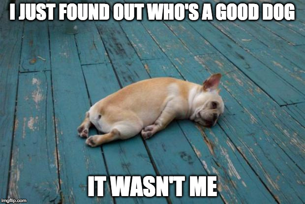 Doggone it. | I JUST FOUND OUT WHO'S A GOOD DOG IT WASN'T ME | image tagged in tired dog,good dog,doggone it | made w/ Imgflip meme maker