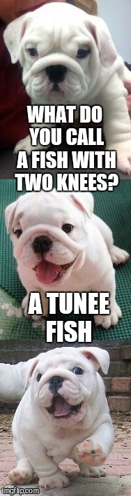 Bulldog pup pun template  | WHAT DO YOU CALL A FISH WITH TWO KNEES? A TUNEE FISH | image tagged in bad pun bulldog pup,bad puns,jbmemegeek,cute dogs,cute puppies | made w/ Imgflip meme maker