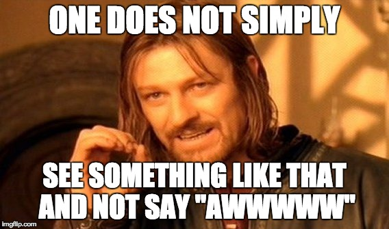 "One Does Not Simply Meme | ONE DOES NOT SIMPLY SEE SOMETHING LIKE THAT AND NOT SAY ""AWWWWW"" 