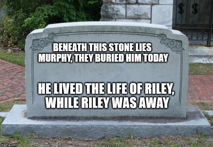 Blank Tombstone | BENEATH THIS STONE LIES MURPHY, THEY BURIED HIM TODAY HE LIVED THE LIFE OF RILEY, WHILE RILEY WAS AWAY | image tagged in blank tombstone | made w/ Imgflip meme maker