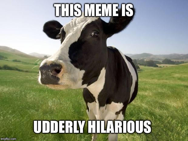 cow | THIS MEME IS UDDERLY HILARIOUS | image tagged in cow | made w/ Imgflip meme maker