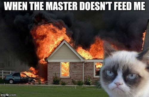 Burn Kitty Meme | WHEN THE MASTER DOESN'T FEED ME | image tagged in memes,burn kitty,grumpy cat | made w/ Imgflip meme maker