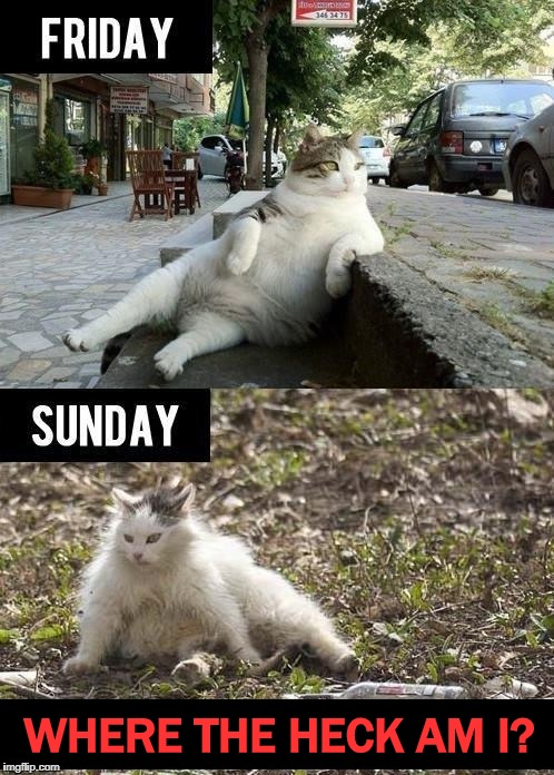 The Lost Weekend | WHERE THE HECK AM I? | image tagged in cats,cat,party,party hard,hungover,hangover | made w/ Imgflip meme maker