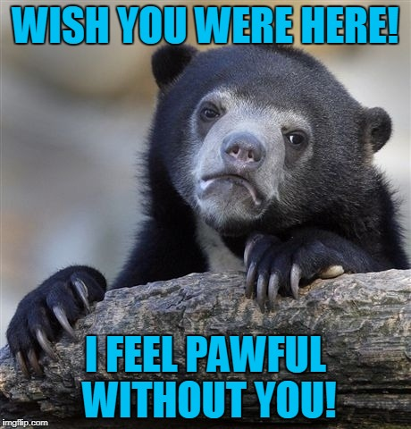 Sad Bear | WISH YOU WERE HERE! I FEEL PAWFUL WITHOUT YOU! | image tagged in memes,confession bear,love,valentine forever alone,valentine's day | made w/ Imgflip meme maker