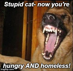 Stupid cat- now you're hungry AND homeless! | made w/ Imgflip meme maker