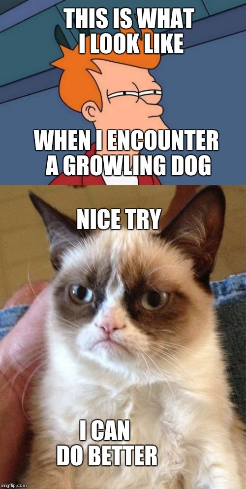 THIS IS WHAT I LOOK LIKE WHEN I ENCOUNTER A GROWLING DOG NICE TRY I CAN DO BETTER | image tagged in grumpy | made w/ Imgflip meme maker