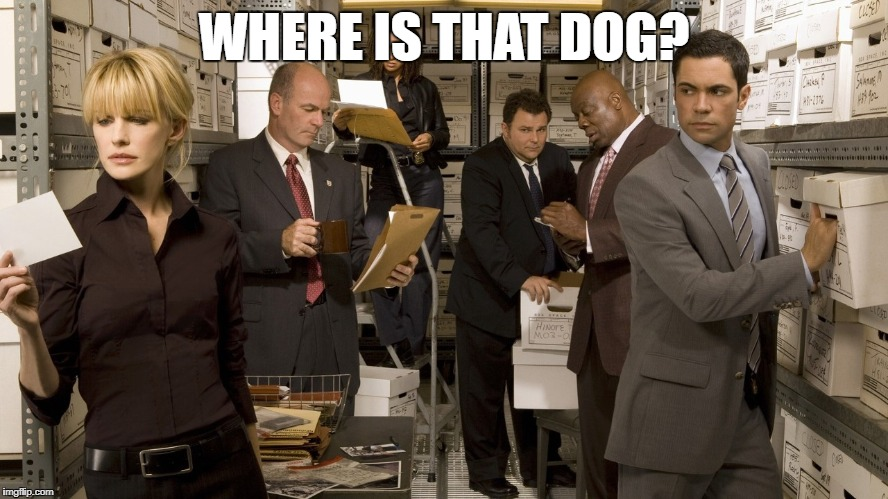 WHERE IS THAT DOG? | made w/ Imgflip meme maker