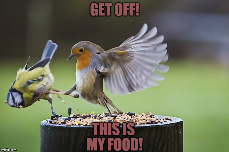 GET OFF! THIS IS MY FOOD! | image tagged in birds | made w/ Imgflip meme maker