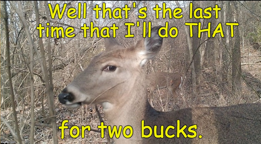 Well that's the last time that I'll do THAT for two bucks. | image tagged in awkward deer | made w/ Imgflip meme maker