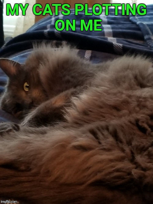 I'm scared | MY CATS PLOTTING ON ME | image tagged in cats,memes,meme | made w/ Imgflip meme maker