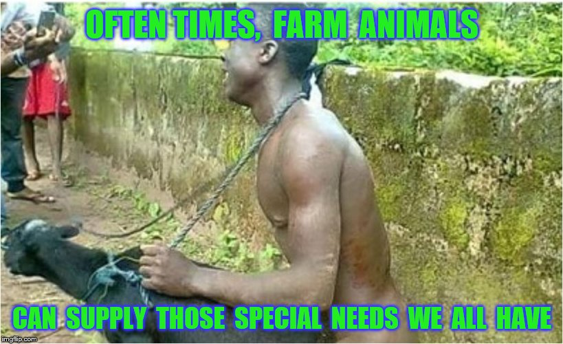 OFTEN TIMES,  FARM  ANIMALS CAN  SUPPLY  THOSE  SPECIAL  NEEDS  WE  ALL  HAVE | made w/ Imgflip meme maker