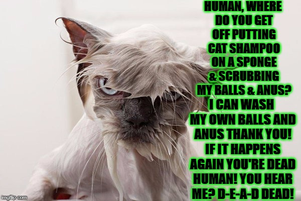 HUMAN, WHERE DO YOU GET OFF PUTTING CAT SHAMPOO ON A SPONGE & SCRUBBING MY BALLS & ANUS? I CAN WASH MY OWN BALLS AND ANUS THANK YOU! IF IT H | image tagged in mad wet kitty | made w/ Imgflip meme maker
