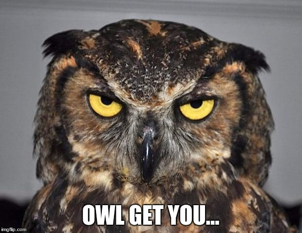 Owl Get You | OWL GET YOU... | image tagged in angry owl,i will find you | made w/ Imgflip meme maker