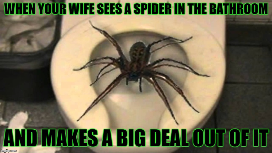 Let him have some privacy  | WHEN YOUR WIFE SEES A SPIDER IN THE BATHROOM AND MAKES A BIG DEAL OUT OF IT | image tagged in memes,first world problems,spider,married life,bathroom | made w/ Imgflip meme maker