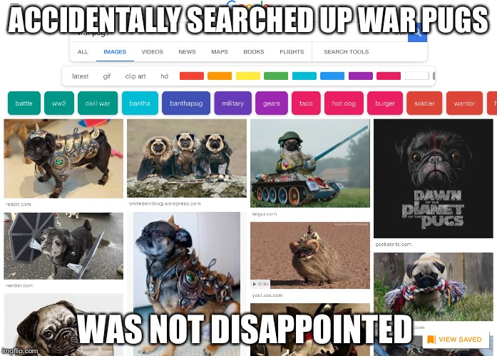 ACCIDENTALLY SEARCHED UP WAR PUGS WAS NOT DISAPPOINTED | image tagged in funny | made w/ Imgflip meme maker