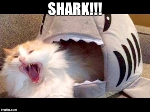 shark | SHARK!!! | image tagged in cats | made w/ Imgflip meme maker