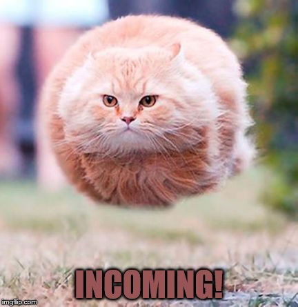 INCOMING! | image tagged in incoming cat | made w/ Imgflip meme maker