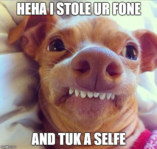 tuna dog | HEHA I STOLE UR FONE AND TUK A SELFE | image tagged in tuna dog | made w/ Imgflip meme maker