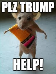 PLZ TRUMP HELP! | image tagged in mexican mouse | made w/ Imgflip meme maker