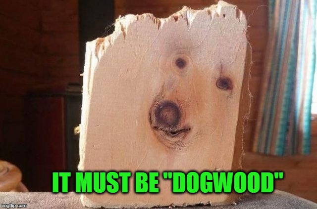 "Dogwood | IT MUST BE ""DOGWOOD"" 